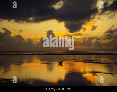 Looking over calm waters at sunrise at silhouette of lone reef fisherman off Sanur Beach on the South East Coast - Stock Photo