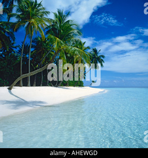 An idyllic picture of leaning palm trees casting a shadow over a white beach and shallow clear water on Kuda Bandos - Stock Photo