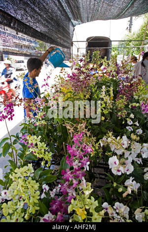 Stallholder watering his orchids in Banchang Thailand - Stock Photo