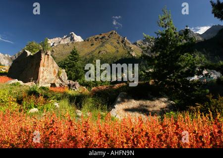 Color full fields in Sangla valley in the region of Kinnaur during monsoon season, Himachal Pradesh India - Stock Photo