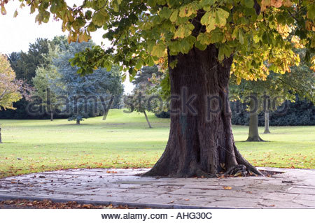 Large tree in park - Stock Photo
