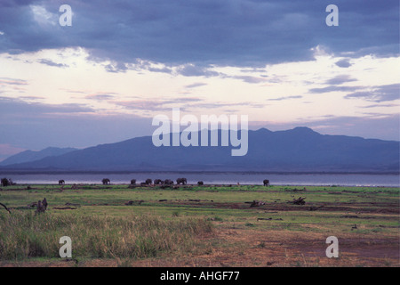 Elephants walking along the shore of Lake Manyara Tanzania East Africa - Stock Photo
