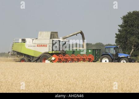 Wheat harvesting in North Norfolk UK - Stock Photo