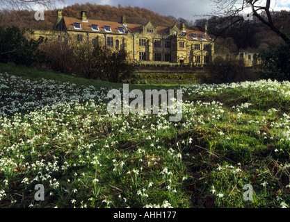 Carpet of Snowdrops Mount Grace Priory North Yorkshire Moors england - Stock Photo