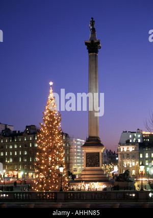 London Dusk in Trafalgar Square illuminated Xmas tree annual gift from people of Norway Nelsons column floodlit - Stock Photo
