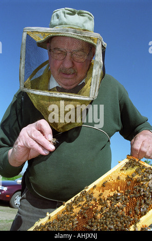 Beekeeper with open hive looking at a queen bee - Stock Photo
