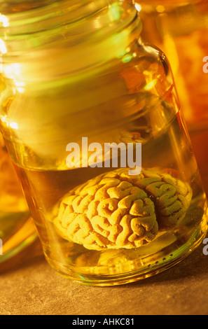 Brain in bottle - Stock Photo