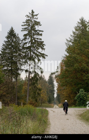 common spruce sick of acid rain and or drought in Munich Upper Bavaria Germany tinsel syndrome Lametta Syndrome - Stock Photo