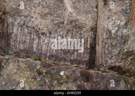 Quartzite Pipe Rock containing worm burrow trace fossils - Stock Photo