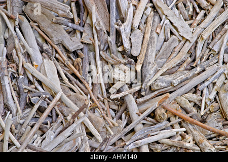 Withered wood sticks texture Valtrebbia Italy - Stock Photo