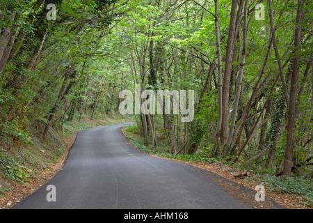 Lush green wood near Travo Valtrebbia Italy - Stock Photo