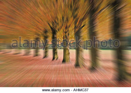 Line of trees in soft focus with zoom effect - Stock Photo