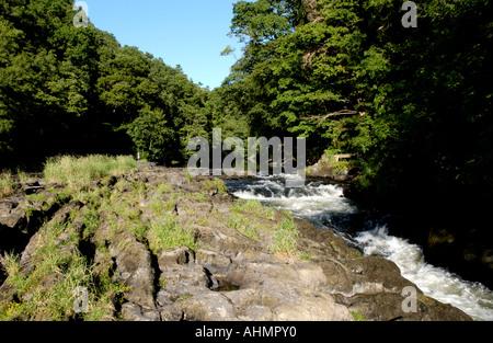 River Teifi at Cenarth Ceredigion West Wales UK - Stock Photo