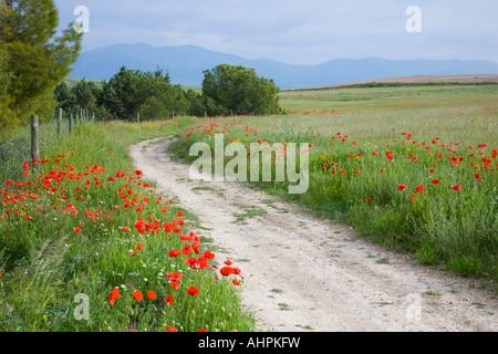 Segovia, Castile and León, Spain. Winding path through poppy field, Sierra de Guadarrama beyond. - Stock Photo