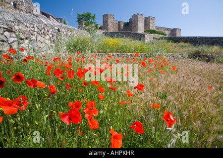 Trujillo, Extremadura, Spain. Poppy field beneath the castle. - Stock Photo