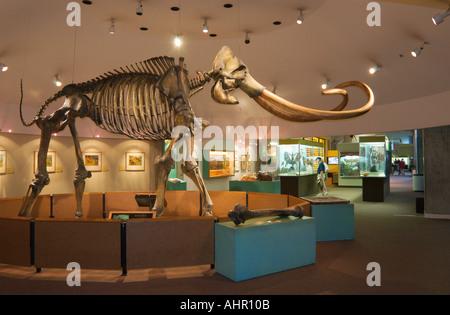 Columbian mammoth Stock Photo: 166986585 - Alamy