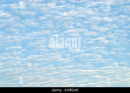 Sky Filled with Cirrocumulus Clouds aka Mackeral Sky - Stock Photo