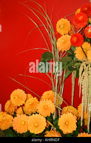 Yellow Dahlia arrangement on red background at Buga 2005 Munich Bavaria Germany - Stock Photo