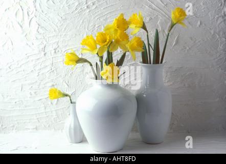 Jonquils in white vases - Stock Photo