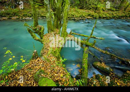Small river Curak in Zeleni vir park near Skrad in Croatia - Stock Photo