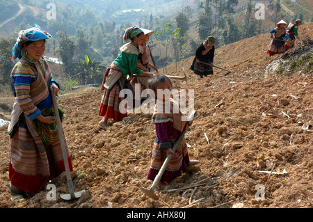 Women From The Flower Hmong Hill Trlbe Working in the Fields,  Bac Ha, near Sapa, Vietnam - Stock Photo