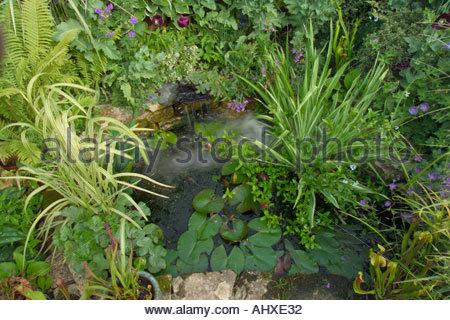 Old tarnwell somerset uk des mary payne front garden small for Garden pond gravel