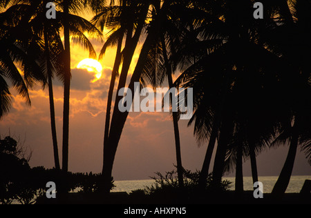 Maldives Kuredhu resort sunset through palm trees - Stock Photo