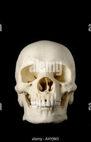Human skull model against black background - Stock Photo