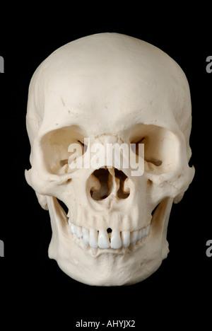 Human skull model against black background