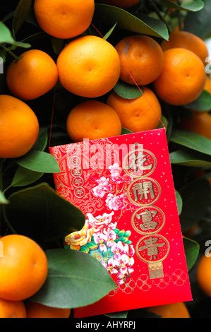 Miniature orange tree with lucky money red envelope at Chinese New Year Hong Kong China - Stock Photo