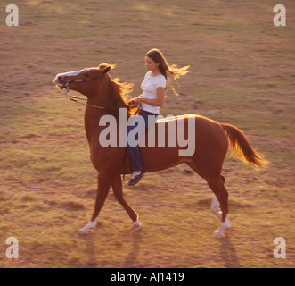 Woman riding bareback and bitless on a Bavarian horse