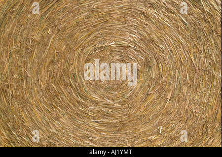 Close up of a circular hay bale - Stock Photo
