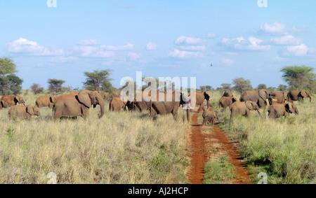 Elephants have right of way! Meru National Park, Meru, Kenya - Stock Photo