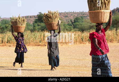 Dogon women carrying baskets of millet. Mali - Stock Photo