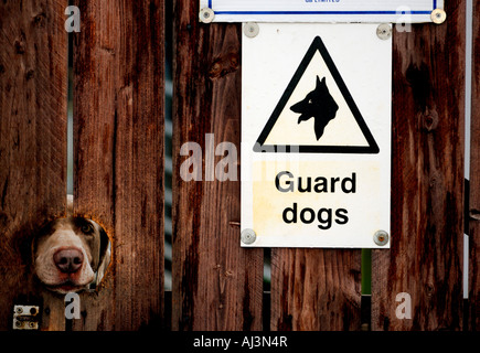 A Weimaraner guard dog keeps a beady eye on passers by through a hole in a locked gate. - Stock Photo