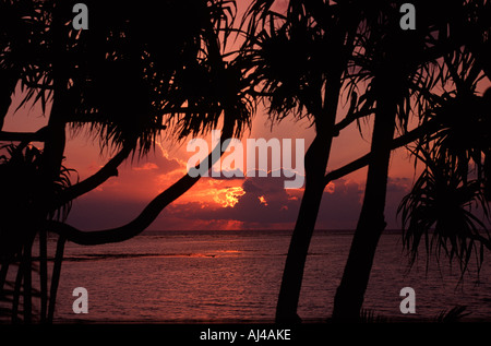 Sunset over the Indian Ocean in the Maldives seen through palm trees - Stock Photo