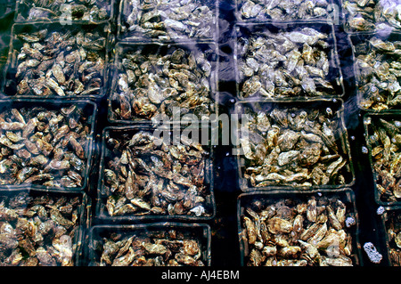 Netherlands  Zeeland Sealand Yerseke Oyster Culture Fishing Oysters Mussels Agriculture Port - Stock Photo