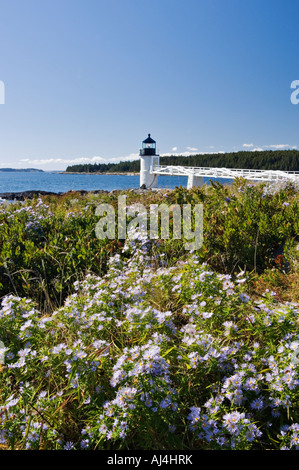 Blooming Asters on the Shore in Front of Marshall Point Lighthouse Port Clyde Maine - Stock Photo