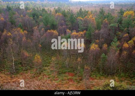 autumn forest in moorland Schwarzes Moor Rhoen Franconia Bavaria Germany Europe - Stock Photo