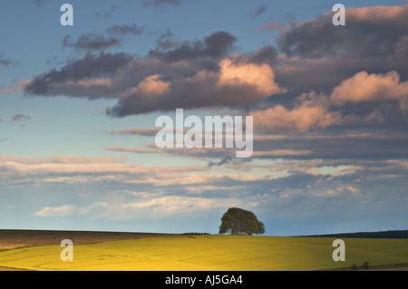 The Ridgeway close to Avebury A copse of beech trees on a bronze age tumuli