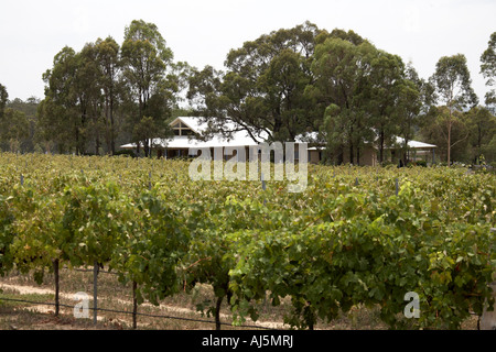 Vines with grapes in vineyard of Oakvale winery in Hunter Valley wine growing area of New South Wales NSW Australia - Stock Photo