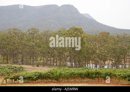Mountains and gum trees near Broke in Hunter Valley wine growing area of New South Wales NSW Australia - Stock Photo