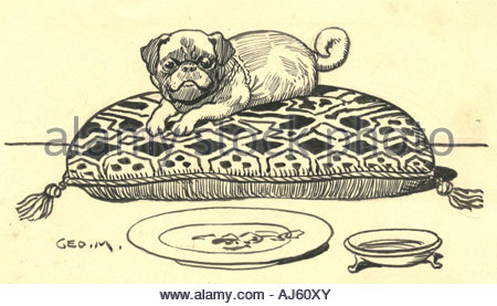 Pen and ink drawing of pug dog by George Morrow - Stock Photo