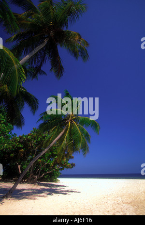 Empty tropical beach in the Maldives Indian Ocean - Stock Photo