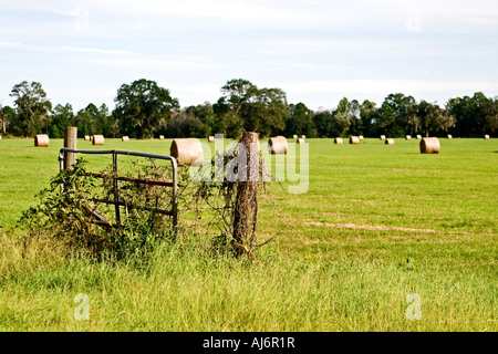 Vines growing on a  gate in a pasture with bales of hay. - Stock Photo
