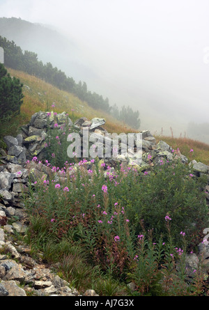 Stones and flowers on mountainside and cloud behind (Gorgany region of Carpathian mountains, Ukraine) - Stock Photo