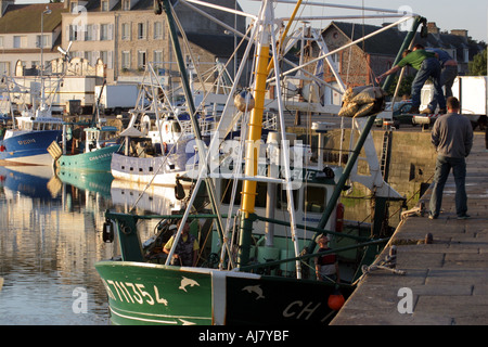 unloading Mussels from fishing boat St Vaast la Hougue Normandy France early one morning - Stock Photo