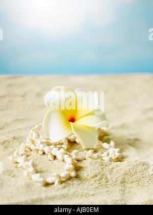 Frangipani Flower and Sea Shell Lei Hawaii - Stock Photo