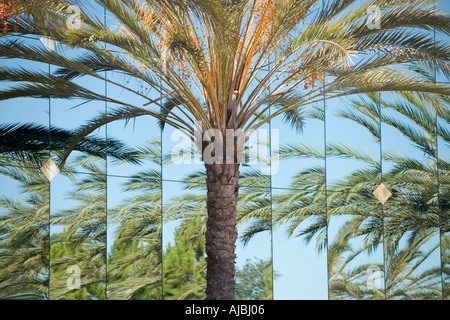 Multiple reflections of a palm tree on a mirrored surface building  - Stock Photo