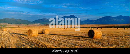 Hay Bales on Summer Wheat Fields - Stock Photo